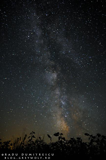 Imagine nocturnă cu Calea Lactee deasupra unui lan de floarea soarelui, realizată de Radu Dumitrescu - fotografie de calatorie