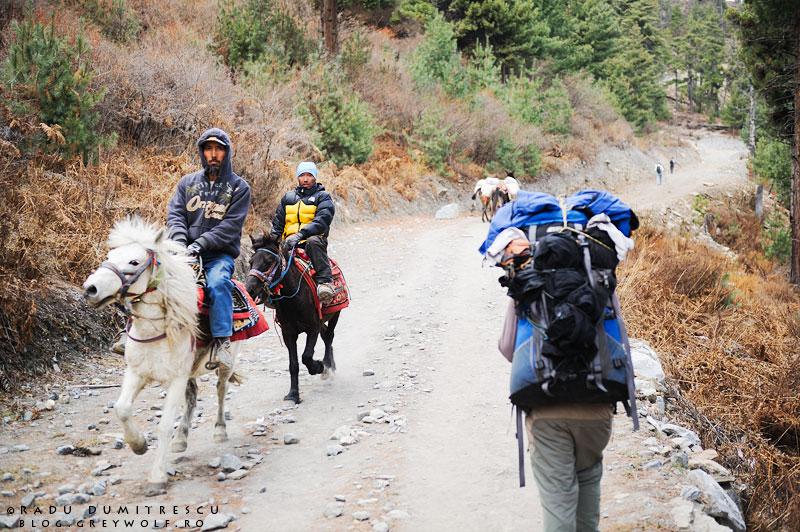 18-nomad-horses-trekker-nepal-manang-mountain-annapurna-circuit-foto-radu-dumitrescu